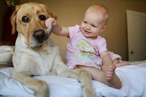 Πώς επηρεάζεται η συναισθηματική ανάπτυξη των παιδιών που μεγαλώνουν σε σπίτια με σκύλους