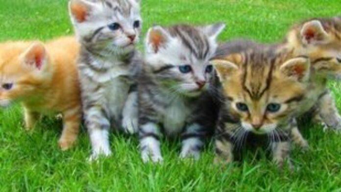 Οι γάτες μπορούν να κολλήσουν την Covid-19 από τους ανθρώπους