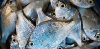 Να φάω ή να μη φάω ψάρια κατά τη διάρκεια της εγκυμοσύνης;