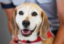Αεροδρόμιο Ελσίνκι: Σκύλοι χρησιμοποιούνται για την ανίχνευση του κορονοϊού