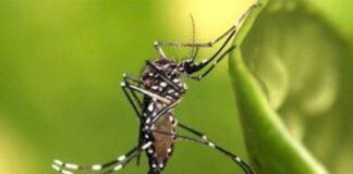Τα κουνούπια δεν μπορούν να μεταφέρουν Covid-19 στους ανθρώπους